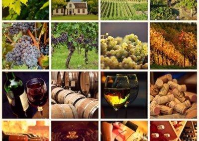 Vinohrady, Víno, Modra
